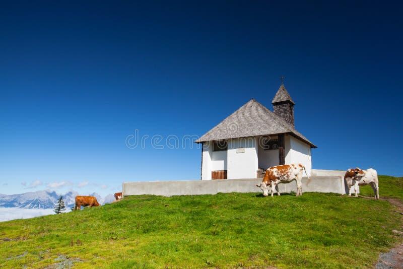 在牧场地在提洛尔阿尔卑斯,奥地利 免版税库存照片
