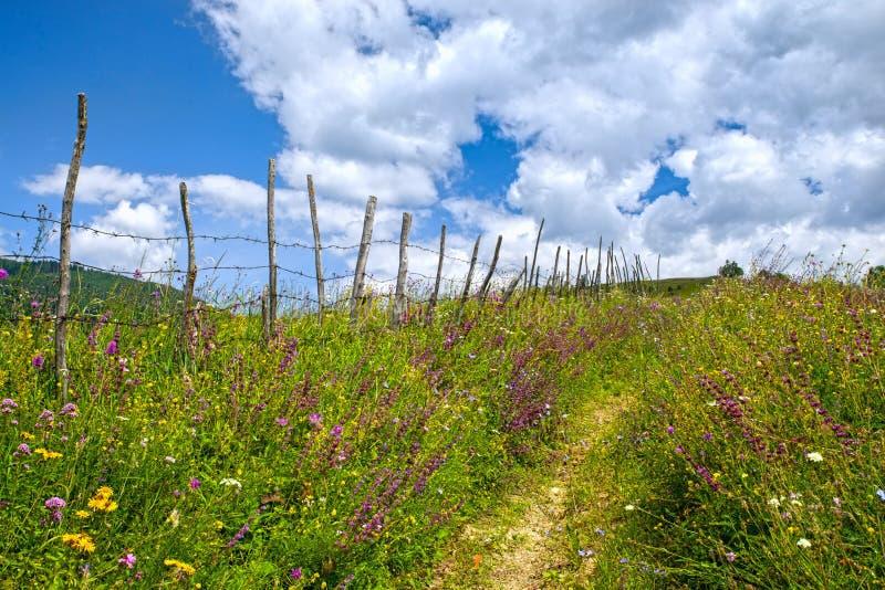 在牧场地的脚道路在篱芭附近 免版税图库摄影