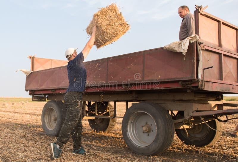 在牵引车拖车- b的年轻和强的农夫投掷干草捆 免版税库存照片