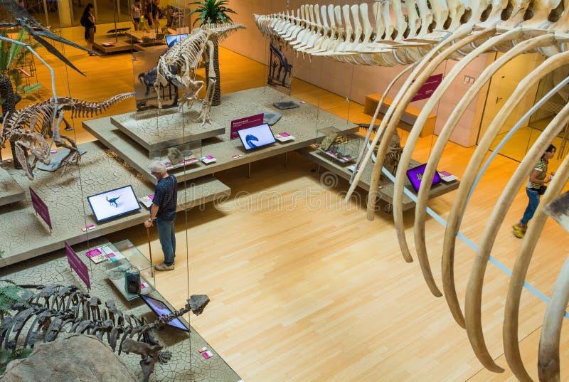 在特伦托,特伦托自治省Alt著名科技馆的pemanent陈列的taxidermized动物  免版税库存照片