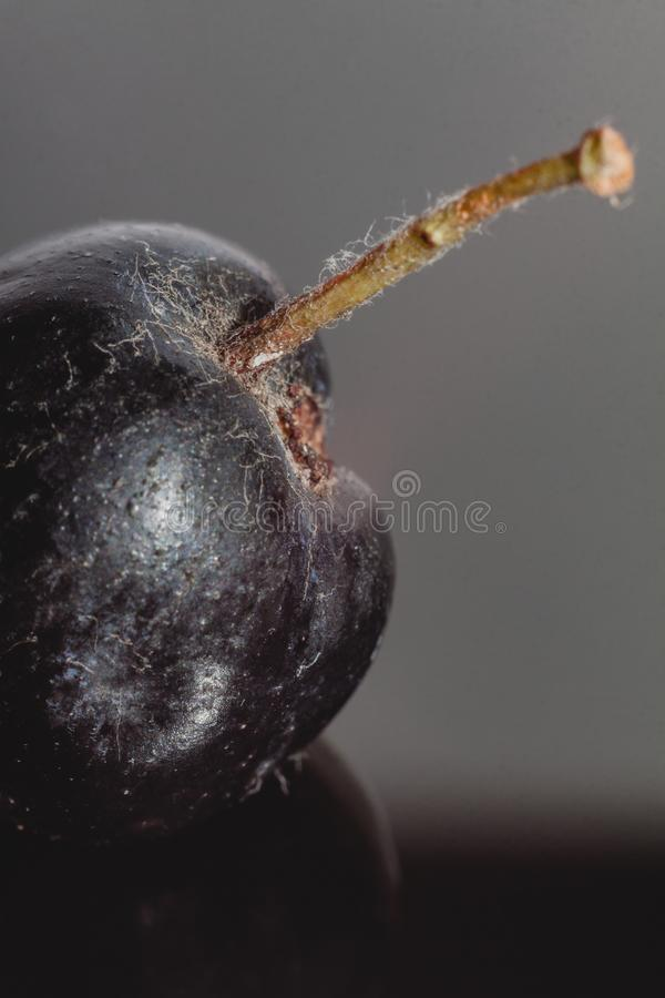 在特写镜头的堂梨属灌木果子 免版税图库摄影