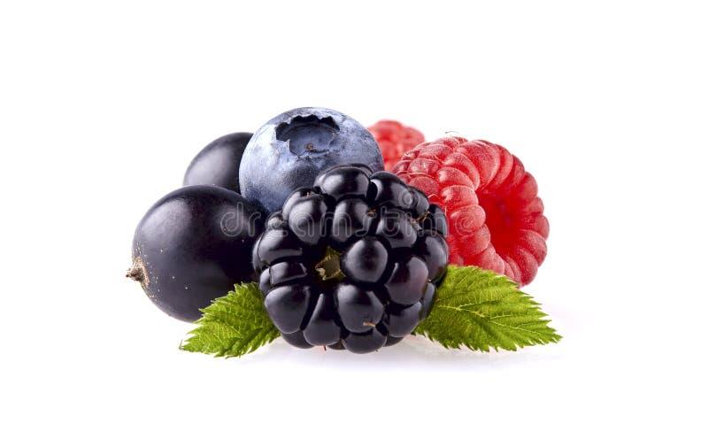 在特写镜头的新鲜的成熟莓果 莓,蓝莓的黑莓 免版税库存图片