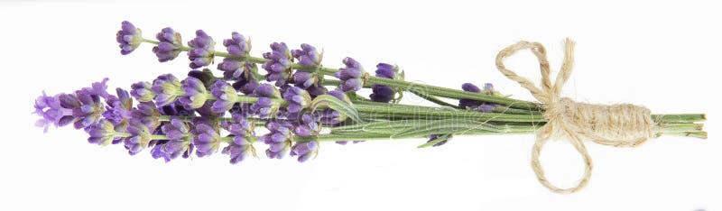 在特写镜头的淡紫色花 束淡紫色花被隔绝在白色背景 免版税库存照片