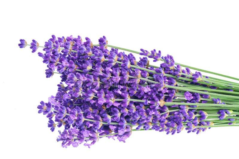 在特写镜头的淡紫色花 免版税库存照片