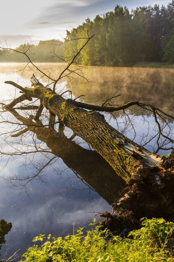 在特热邦,南波希米亚,Czecg共和国附近的池塘 库存图片