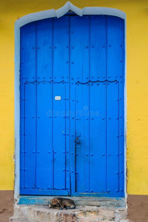 在特立尼达,古巴尾随睡觉在蓝色门前面 免版税库存照片