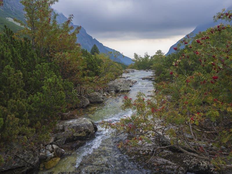 在狂放的河小河的看法与冰砾、秋天色的欧洲花楸和喜怒无常的天空在山谷Velka Studena Dolina在斯洛伐克 免版税库存照片