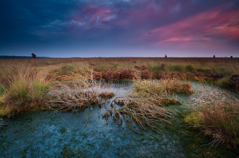 在狂放的沼泽的剧烈的日落 库存图片