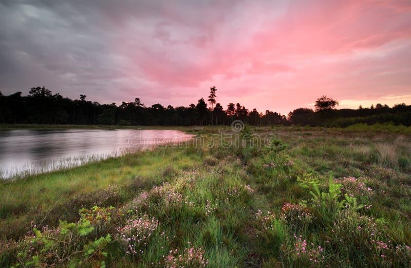 在狂放的湖和开花的石南花的紫色日出 免版税图库摄影