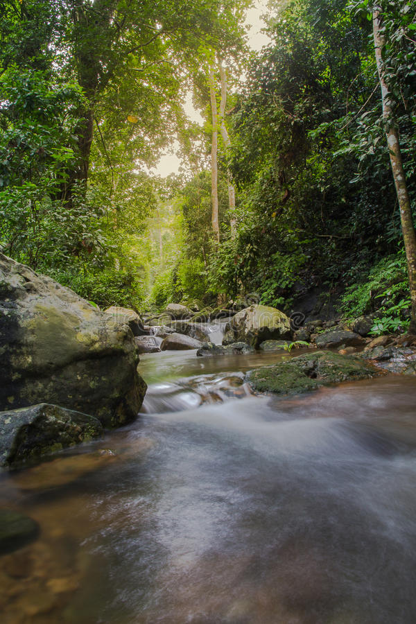 在狂放的美丽的小瀑布,自然 免版税库存图片
