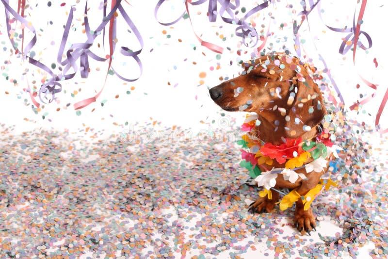 在狂欢节沙龙的达克斯猎犬 库存图片