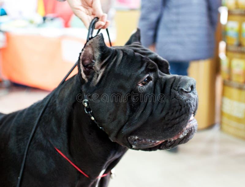 在狗展示的可爱的动物 库存照片