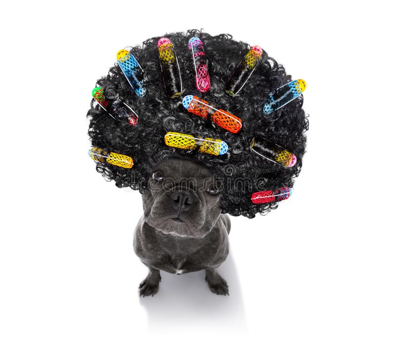 在狗的坏发型 免版税库存图片