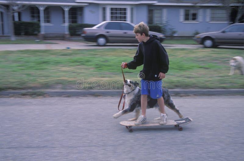 在狗被拉的滑板的孩子 免版税图库摄影