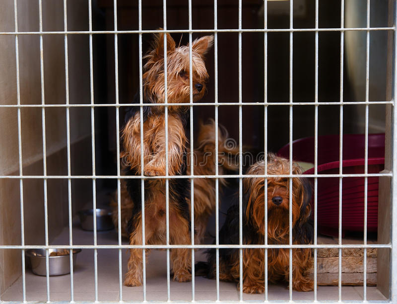 在狗风雨棚的两条逗人喜爱的迷路的狗 库存照片