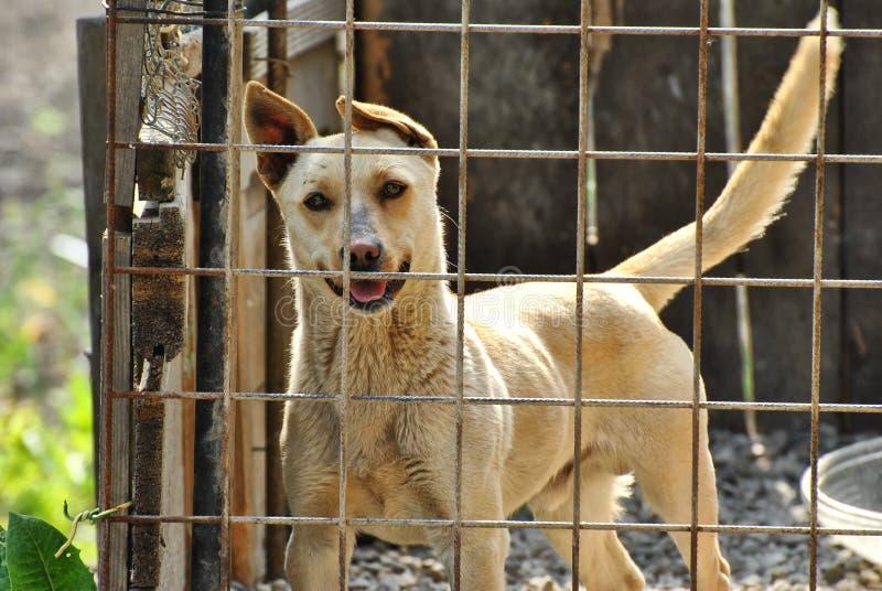 在狗风雨棚的逗人喜爱的狗 免版税库存图片