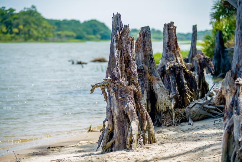 在狩猎海岛南卡罗来纳附近的自然场面 库存图片