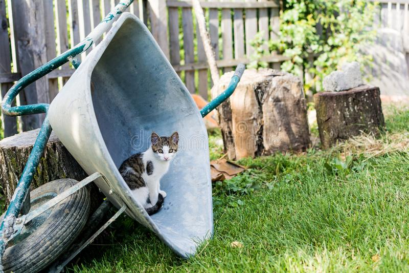 在独轮车的小猫 免版税库存图片