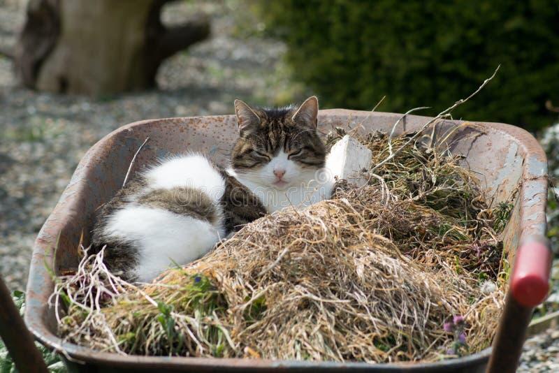 在独轮车的猫 免版税库存照片