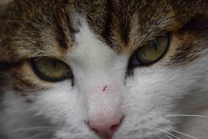 在独轮车的猫 库存图片