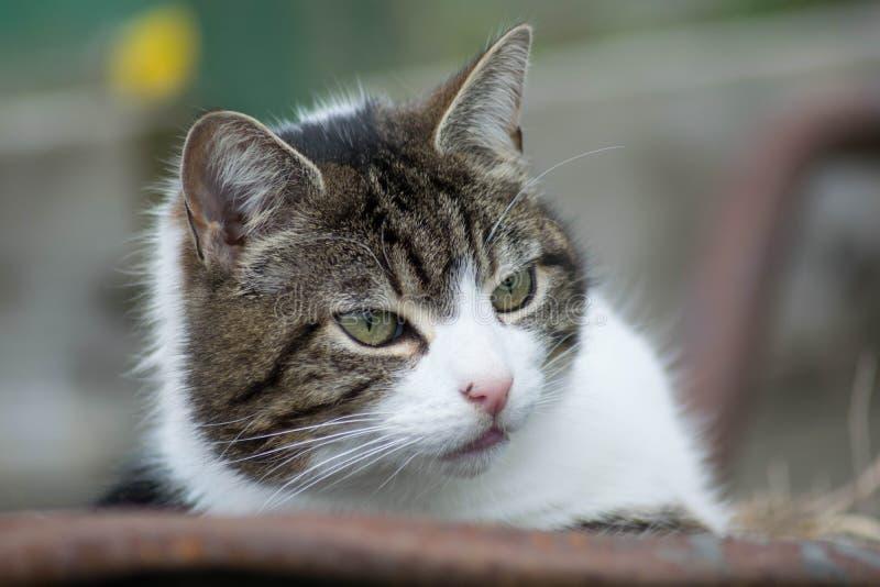 在独轮车的猫 库存照片