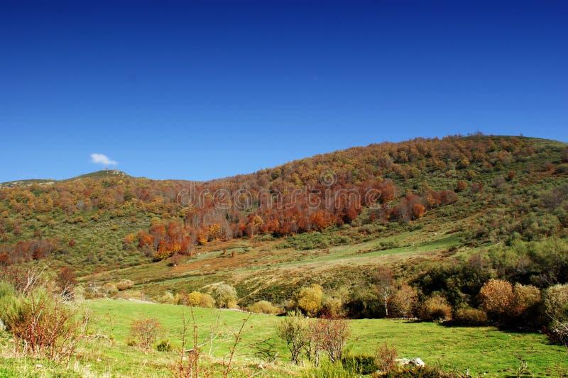 在狮子领域的秋天颜色 免版税库存照片