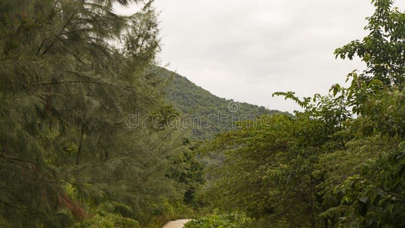 在猴子半岛的植被在市的岘港附近 免版税库存照片