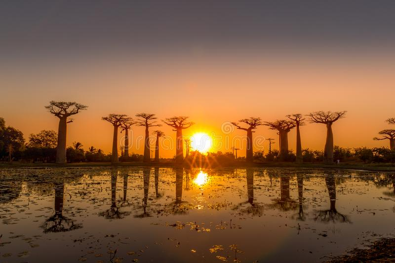 在猴面包树胡同的Sunaset在马达加斯加 免版税库存图片