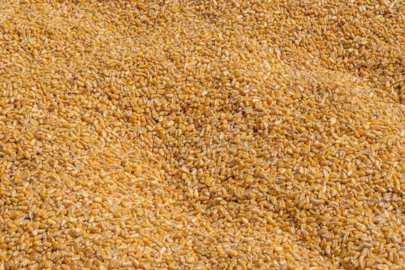 在玉米容器的谷核 库存图片