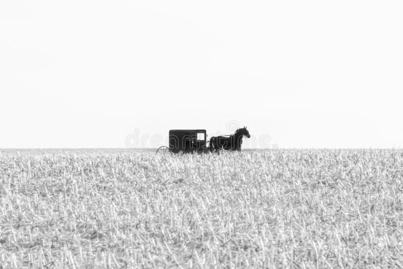 在玉米的一个被收获的领域的门诺派中的严紧派的用马拉的儿童车在黑白,兰开斯特县,PA的 库存照片