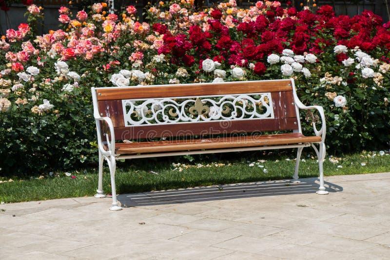 在玫瑰园中间的长木凳 免版税库存图片