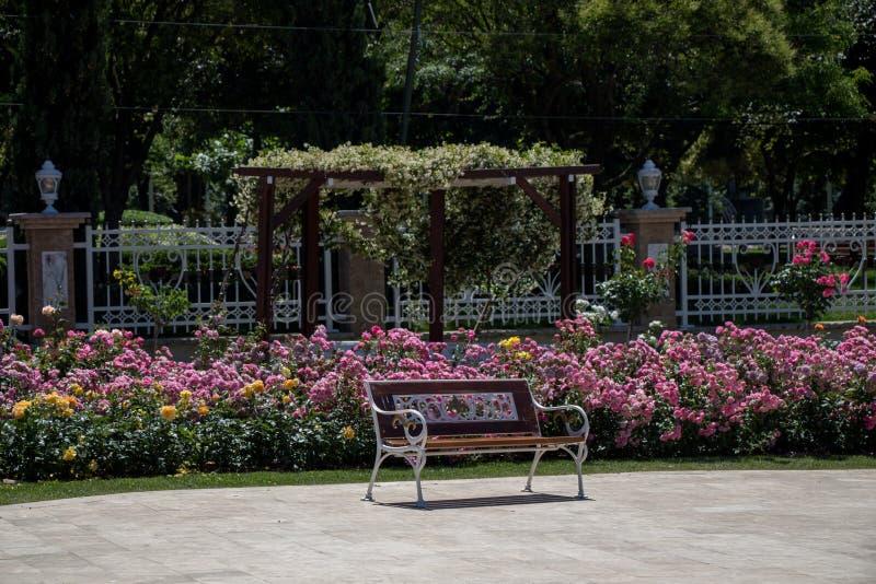 在玫瑰园中间的长木凳 免版税库存照片