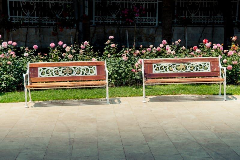 在玫瑰园中间的长木凳 库存照片
