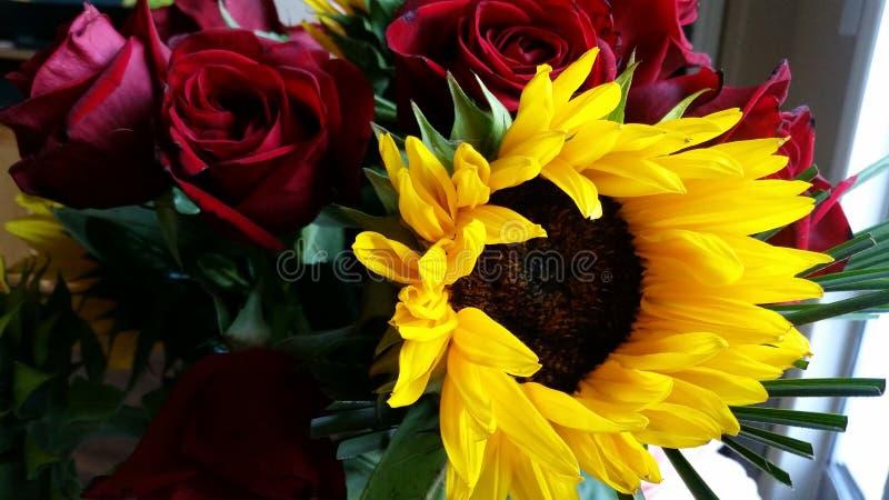 在玫瑰的阳光 免版税库存照片