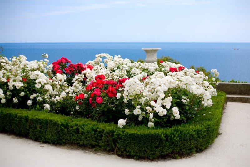 在玫瑰色海运视图的灌木 库存照片