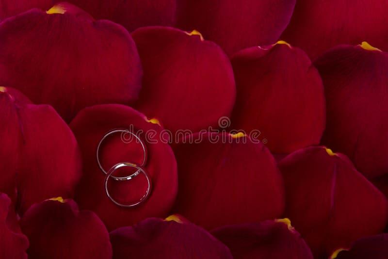 在玫瑰花瓣的婚礼乐队 库存图片