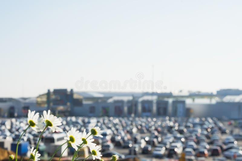 在现代购物中心,夏天晴天旁边的抽象模糊的停车场,与在前景的花 摘要被弄脏的汽车 免版税库存照片