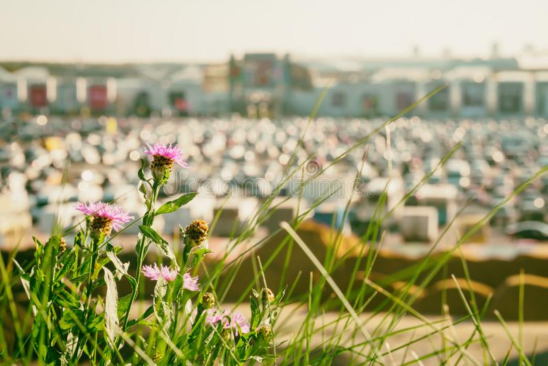 在现代购物中心,夏天晴天旁边的模糊的停车场,与在前景的花 摘要被弄脏的汽车停车处,外面 免版税库存图片