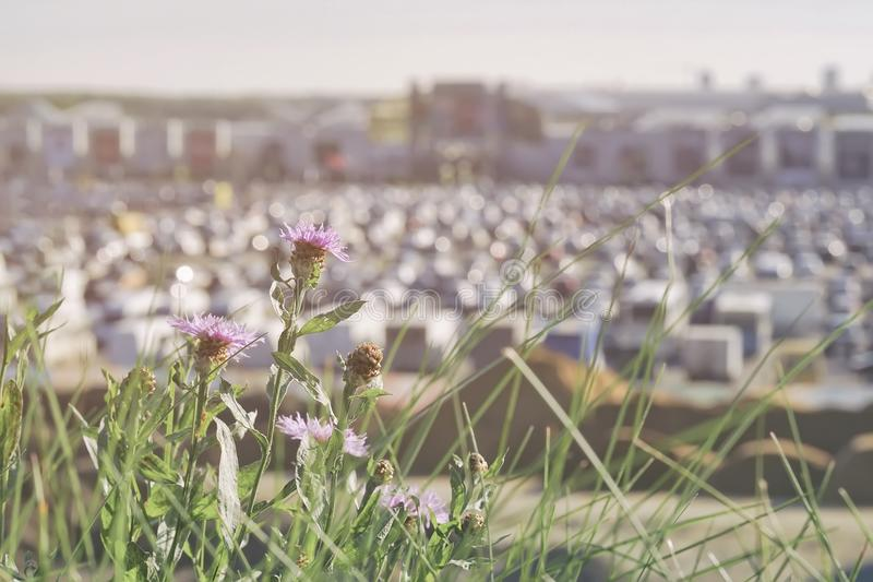在现代购物中心,夏天晴天旁边的模糊的停车场,与在前景的花 摘要被弄脏的汽车停车处 库存图片