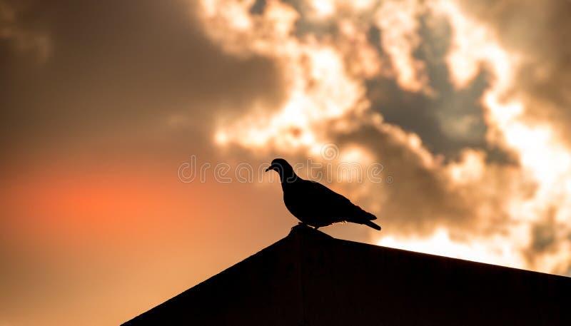 在现出轮廓的屋顶的一只鸟 免版税库存照片