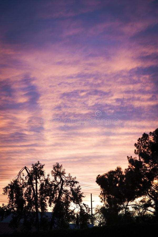 在现出轮廓的树的日落 库存图片