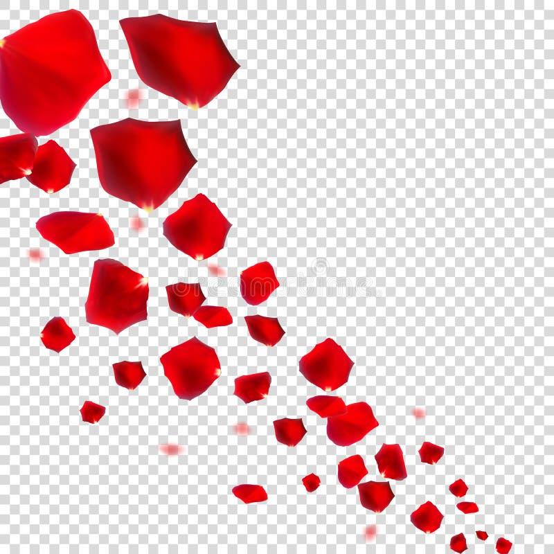 在现实透明的背景的抽象自然玫瑰花瓣 向量例证