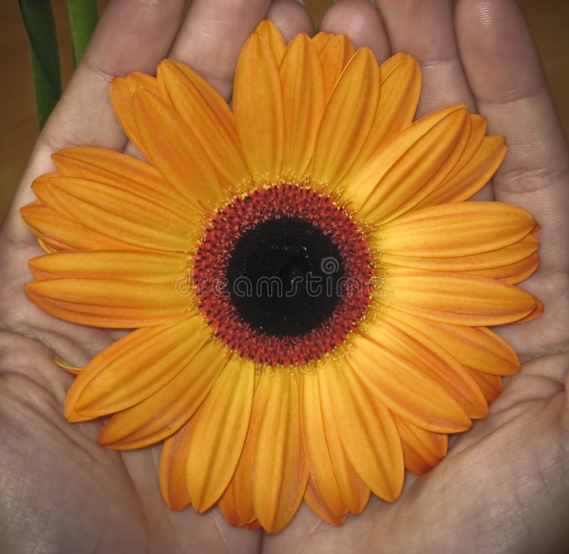 在现有量的花开花 图库摄影