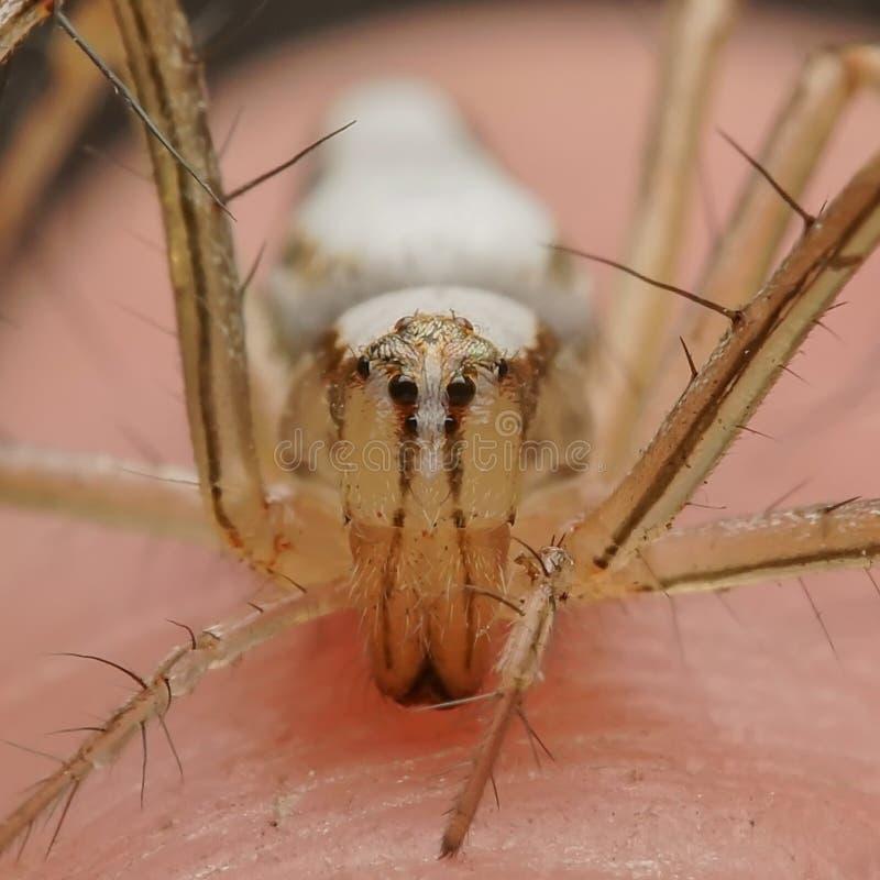在现有量的蜘蛛 免版税库存照片