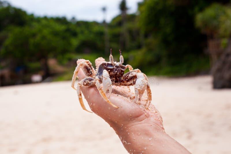 在现有量的螃蟹 库存照片