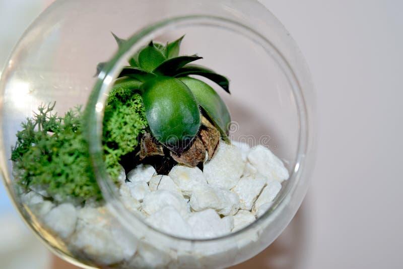 在玻璃地球保存的装饰花隔绝在白色 免版税库存图片