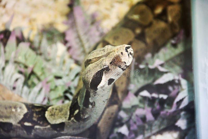 在玻璃容器的蛇 免版税库存照片