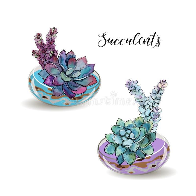 在玻璃水族馆的多汁植物 色的沙子 花装饰构成 图象 水彩 向量 皇族释放例证