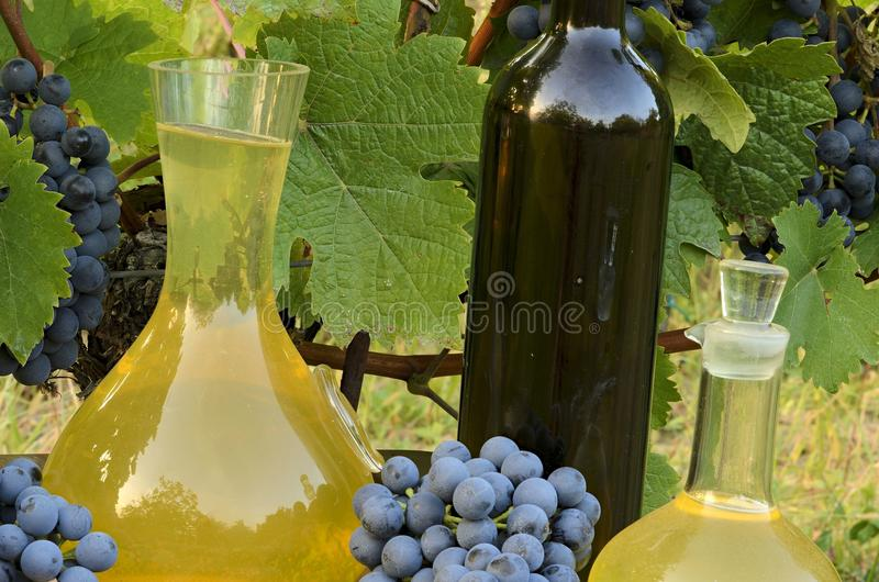 在玻璃水瓶的白葡萄酒和在瓶的红葡萄酒在葡萄园背景 免版税库存照片