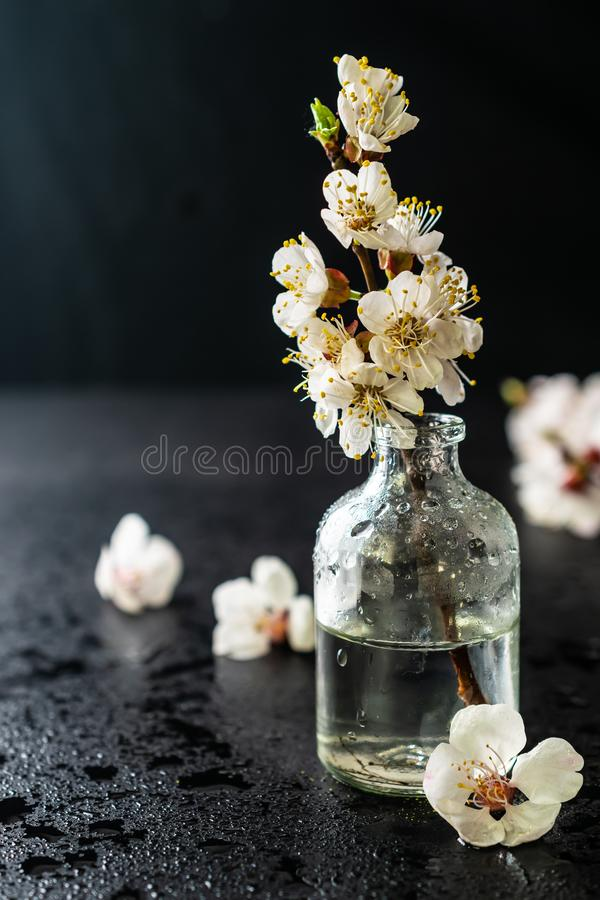 在玻璃瓶的俏丽的春天樱花在黑背景 免版税库存图片